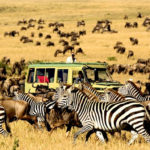 7 Activities To Do When Traveling In Africa